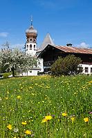 Deutschland, Bayern, Oberbayern, Berchtesgadener Land, Oberau: Kirche und Bauernhof mit Fruehlingswiese | Germany, Bavaria, Upper Bavaria, Berchtesgadener Land, Oberau: church, farmhouse and spring meadow