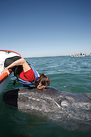 pr7110-D. Gray Whale (Eschrichtius robustus). Friendly calf approaches boat, lucky tourist (model released) offers it a kiss for good luck. San Ignacio Lagoon, Baja, Mexico..Photo Copyright © Brandon Cole. All rights reserved worldwide.  www.brandoncole.com..This photo is NOT free. It is NOT in the public domain. This photo is a Copyrighted Work, registered with the US Copyright Office. .Rights to reproduction of photograph granted only upon payment in full of agreed upon licensing fee. Any use of this photo prior to such payment is an infringement of copyright and punishable by fines up to  $150,000 USD...Brandon Cole.MARINE PHOTOGRAPHY.http://www.brandoncole.com.email: brandoncole@msn.com.4917 N. Boeing Rd..Spokane Valley, WA  99206  USA.tel: 509-535-3489