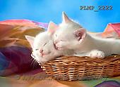Marek, ANIMALS, REALISTISCHE TIERE, ANIMALES REALISTICOS, cats, photos+++++,PLMP2222,#a#