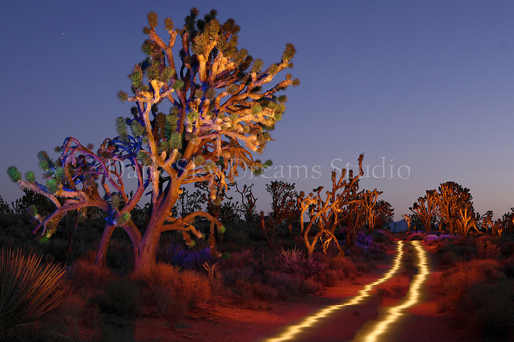 Joshua tree and dirt road at twilight in the Mojave National Preserve, near Baker, California