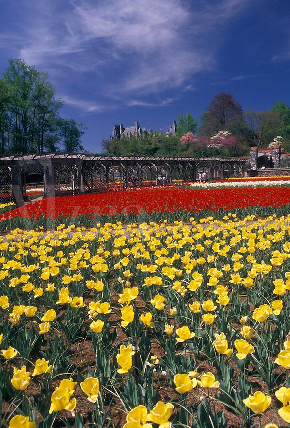 AJ2645, gardens, Biltmore Estate, Biltmore, Asheville, North Carolina, Spring flowers of red and yellow inside the Walled flower Garden at Biltmore Estate in Asheville in the state of North Carolina.