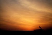 Sunrise on the Masai Mara.