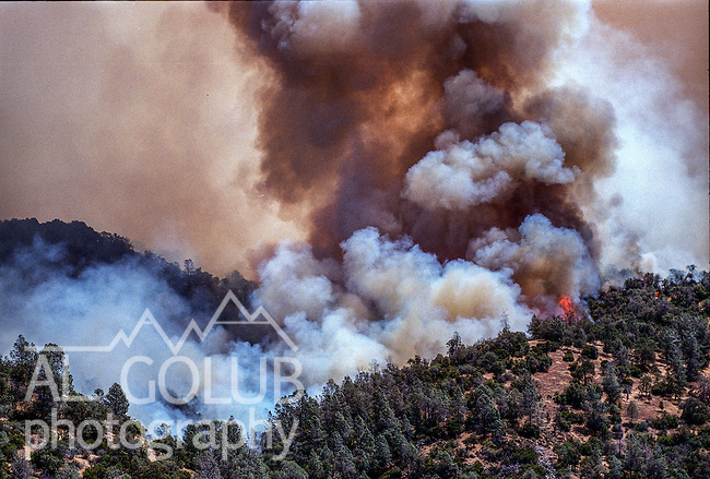 August 17, 1992 Angels Camp, California -- Old Gulch Fire— Fire burns up hillside near Old Gulch Road.  The Old Gulch Fire raged over some 18,000 acres, destroying 42 homes while threatening the Mother Lode communities of Murphys, Sheep Ranch, Avery and Forest Meadows.