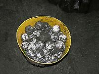 leatherback sea turtle eggs, Dermochelys coriacea, in a bucket before relocation, Dominica, Caribbean, Atlantic