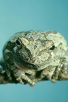 Close up portrait of frog