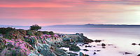 Sunrise and purple ice plant blossoms and ocean. Pacific Grove, California