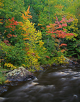 Pattison State Park, WI<br /> Hardwood forest in early fall color on the Black River on the Beaver Slide Nature Trail
