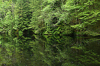 Trees  reflected in the forest lake. Lynn canyon park, North Vancouver, British Columbia, Canada.