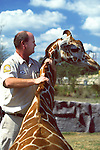 Giving Reinforcement To Giraffe
