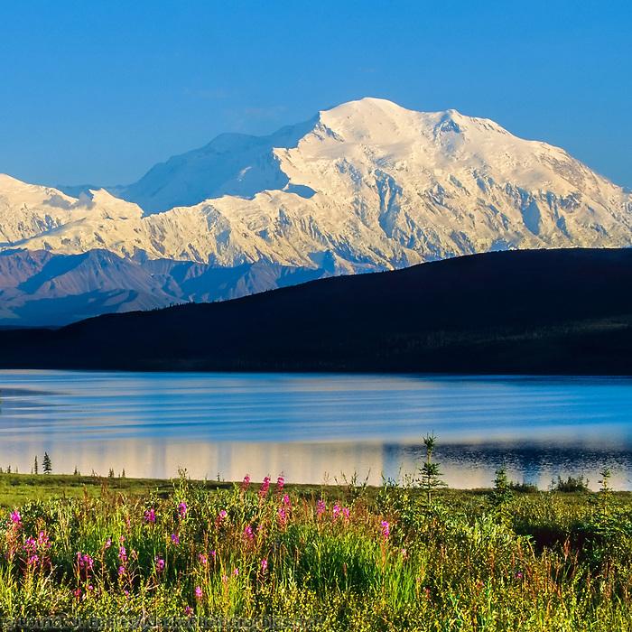 Summer landscape of Mt. Denali, Wonder lake, fireweed, Denali National Park, Alaska