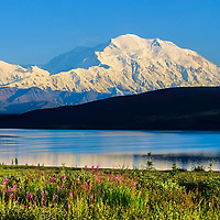 Summer landscape of Mt. McKinley, Wonder lake, fireweed, Denali National Park, Alaska