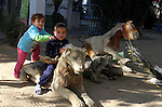 Palestinian children sit on exotic taxidermied animals, which according to their owners died because they could not afford to feed the animals, at a park in Rafah in the southern Gaza Strip January 4, 2017. Photo by Abed Rahim Khatib