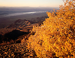 Autumn Aspen on San Francisco Mountains, Wah Wah Valley, West Desert