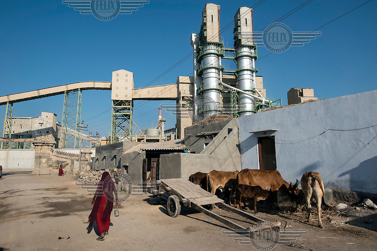 A group of cows being fed outside a small family house is dwarfed by the Birla Cement Factory. Much of the traditional architecture in Gujarat's rapidly growing towns is being replaced with modern concrete, glass and chrome buildings.