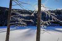 Trees Covered With Frost In Winter at Lilypad Pond in the Adirondack Forest  Preserve in New York
