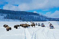 Snowmobilers and Bison in Yellowstone's Hayden Valley. Wyoming.  Winter..