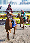 January 25, 2020: #3 Atomic Blonde with jockey Javier Castellano on board wins the South Beach Stakes during the Pegasus World Cup Invitational at Gulfstream Park Race Track in Hallandale Beach, Florida. Liz Lamont/Eclipse Sportswire/CSM