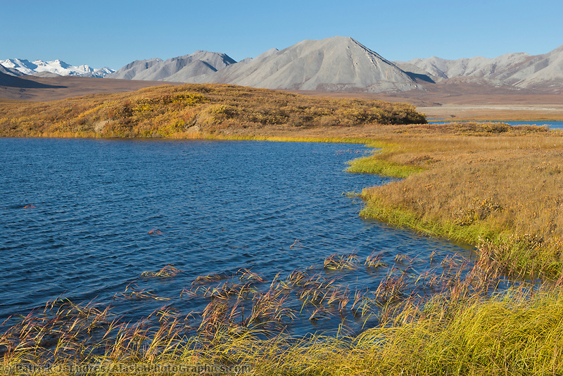 Tundra pond in the Atigun canyon, Endicott mountains of the Brooks Range.