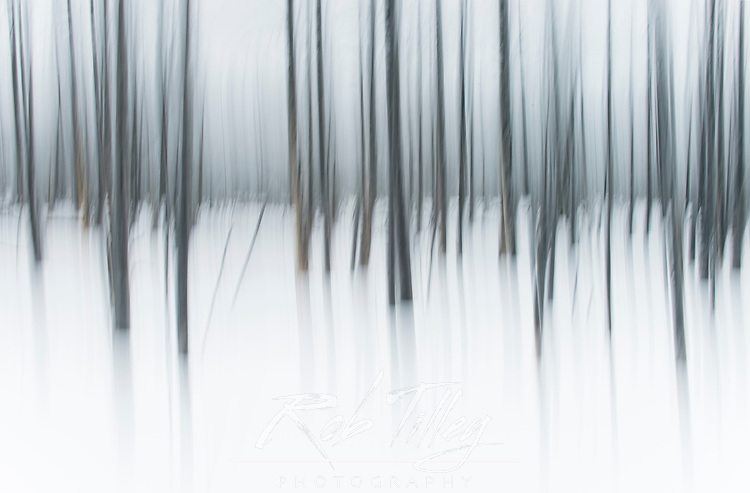 USA, Wyoming, Yellowstone NP, Winter Forest Abstract