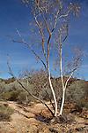 Gorge Country, Mutawinji NP Broken Hill Nsw