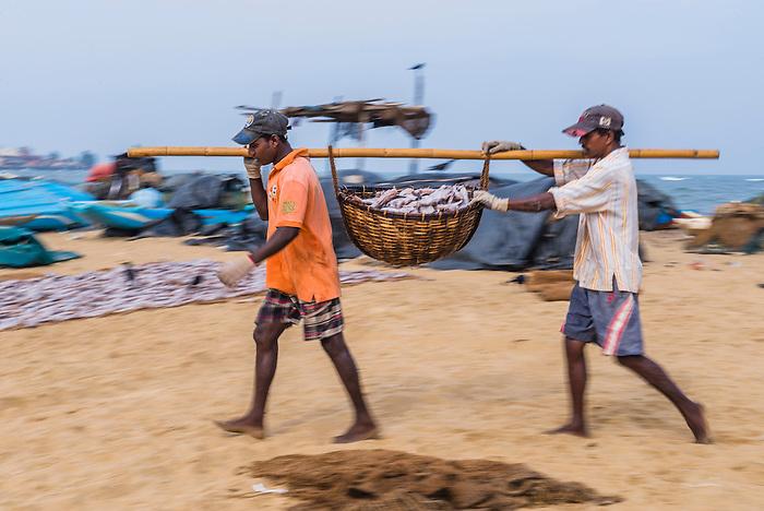 Fishermen working in negombo fish market lellama fish for Williams fish market