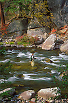 A fisherman in Rock Creek in Montana with fall color and smooth water from a long exposure setting