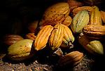 El cacao se transporta ha unos determinados puntos para abrirlos, sacar la almendra y aprovechar la cascara para hacer abono.  Chuao. Venezuela. © Juan Naharro