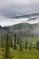 Morning fog over the taiga and tundra of Denali National Park, Interior, Alaska.