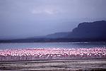Lesser flamingos at Lake Nakuru