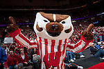 December 31, 2009: Wisconsin Badgers mascot Bucky Badger cheers during a Big Ten Conference NCAA basketball game against the Ohio State Buckeyes at the Kohl Center on December 31, 2009 in Madison, Wisconsin. The Badgers won 65-43. (Photo by David Stluka)