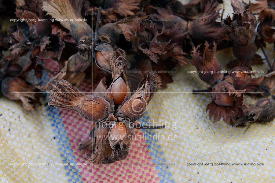 TURKEY, Cumayeri near Duzce, hazelnut farming and harvest / TUERKEI, Cumayeri, Anbau und Ernte von Haselnuessen, Haselnuesse sind ein wichtiger Rohstoff fuer Schokocreme wie Nutella oder die Schokoladenindustrie