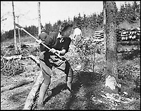 BNPS.co.uk (01202 558833)<br /> Pic:   ForestryCommision/HistoryPress/BNPS<br /> <br /> A Lumberjill of the Women's Timber Corps.<br /> <br /> These inspiring photos tell the little known story of the patriotic women who chopped down trees to help us win the Second World War.<br /> <br /> When war was declared in September 1939 Britain was almost completely dependent on imported timber and only had seven months worth of it stockpiled.<br /> <br /> With men being sent to the front line in their droves, the Woman's Timber Corps was established to fell trees, operate sawmills and run forestry sites.<br /> <br /> About 15,000 women, some as young as 14, volunteered to carry out the arduous tasks previously done by men.