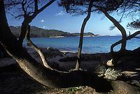 Europe/France/Provence-Alpes-Côte d'Azur/83/Var/Ile de Porquerolles: pointe de l'Alycastre