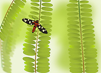 Vector illustration of black dotted butterfly sitting on green branch with tiny leaves.<br />