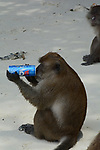 Monkey drinking from a can by Joshua Da Costa