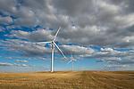 Windmills in a field generating power with warm sunlight shining on them, Saskatchewan.