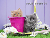 Xavier, ANIMALS, cats, photos, SPCHCATS696,#A# Katzen, gatos
