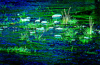 Rocks and grass poking out of the blue background of Gibbon River in Yellowstone National Park.