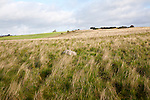 Fyfield Down national nature reserve, Marlborough Downs, Wiltshire, England, UK unimproved chalk grassland with sarsen stones i