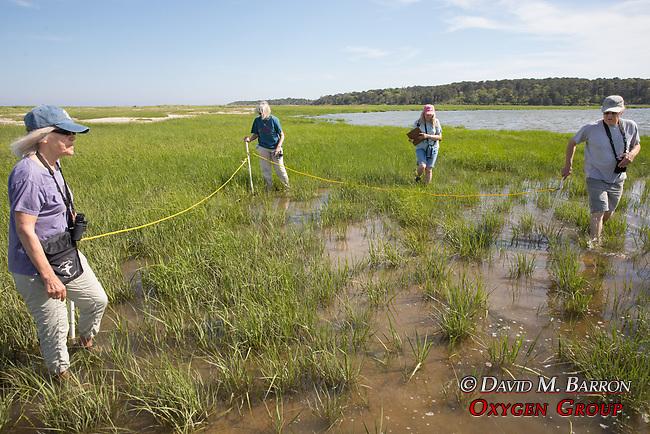 Mary, Judith, Diane & Bob On Horseshoe Crab Survey