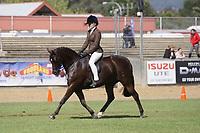 Champion Child's Hunter Pony
