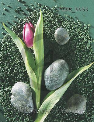 Jacek, FLOWERS, portrait, macro, photos, PLSE, PLSEB069,#F# Blumen, flores, retrato