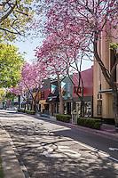 Jacaranda Trees in Bloom on Harbor Blvd in Downtown Fullerton