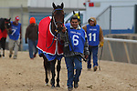 January 18, 2016: #6 Discreetness before the running of the Smarty Jones Stakes at Oaklawn Park in Hot Springs, AR. Justin Manning/ESW/CSM
