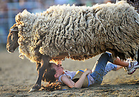 McKenzie Humphrey gets run over by a sheep after falling off during the mutton busting competition at Dave Martin's Rodeo Thursday at the 2010 Fauquier County Fair in Warrenton, VA.