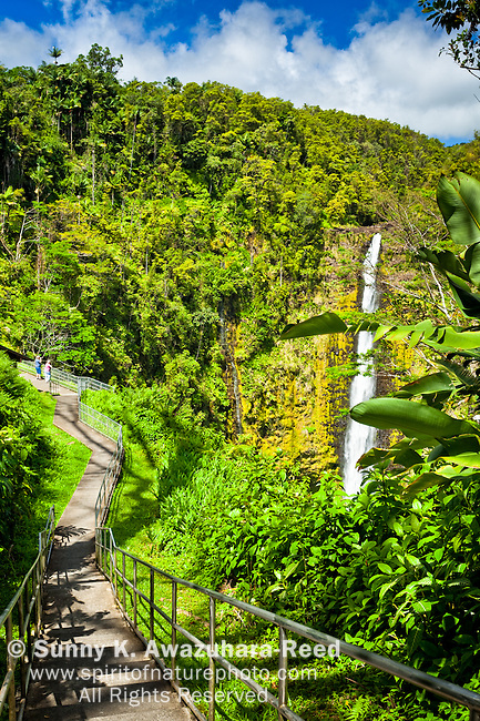 Tourists viewing Akaka Falls from paved  observation area at Akaka Falls surrounded with lush green rainforest. Akaka Falls State Park, Big Island, Hawaii.