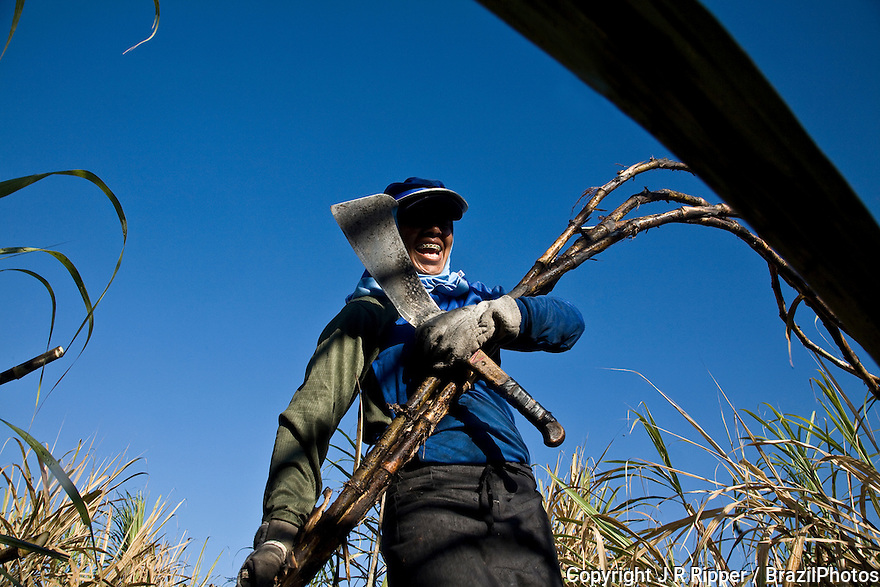 Many women work as sugarcane cutters in Brazil - Ester ethanol and sugar plant, Cosmopolis city, Sao Paulo State, Brazil.