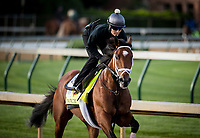 LOUISVILLE, KY - MAY 01: Patch gallops in preparation for the Kentucky Derby at Churchill Downs on May 01, 2017 in Louisville, Kentucky. (Photo by Alex Evers/Eclipse Sportswire/Getty Images)