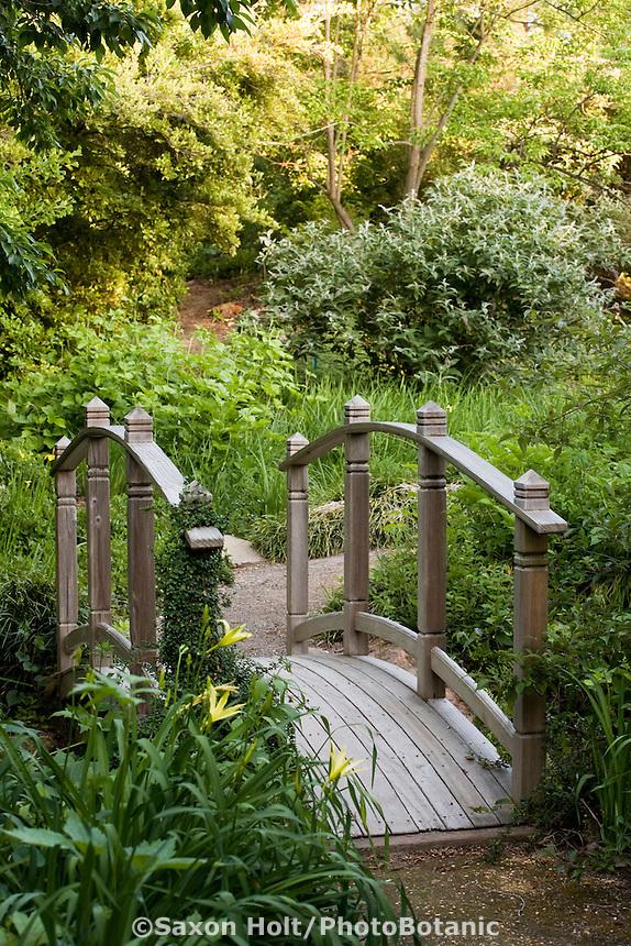 small wooden bridge in path over creek drainage with Hemerocallis vespertina in Quarryhill Botanical Garden