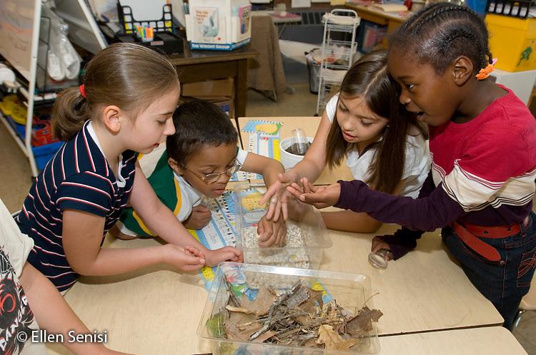 MR/Schenectady, New York.Zoller School- Inclusion classroom (urban, public, elementary school)/ Grade 1.Students work on group science project creating a terrarium in class..MR:g1b-AF.© Ellen B. Senisi